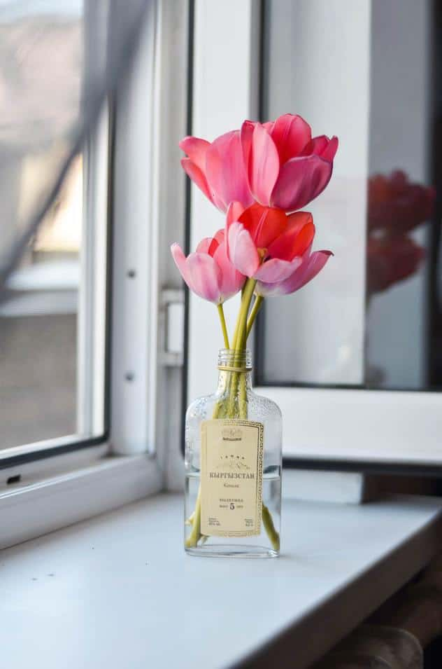 Pink red tulips next to a window in a recycled green beauty bottle